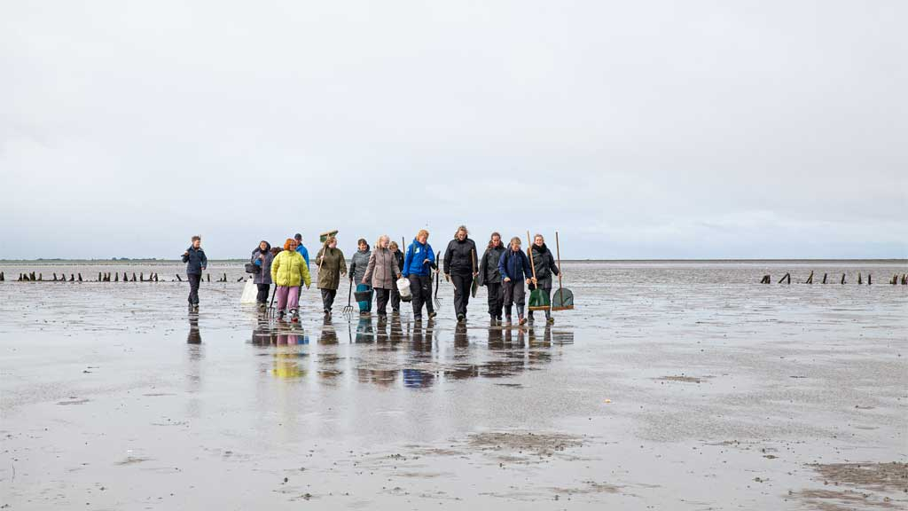 Ture på vaden   Meet & More by the Wadden Sea